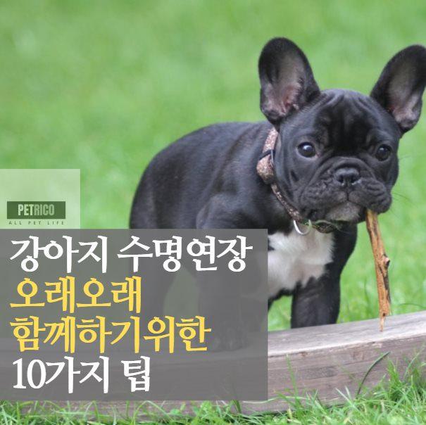 강아지 수명