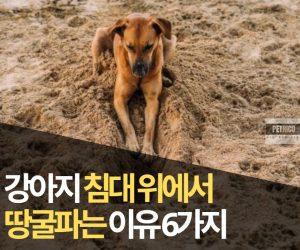 강아지 땅 파는 행동