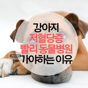 강아지 저혈당