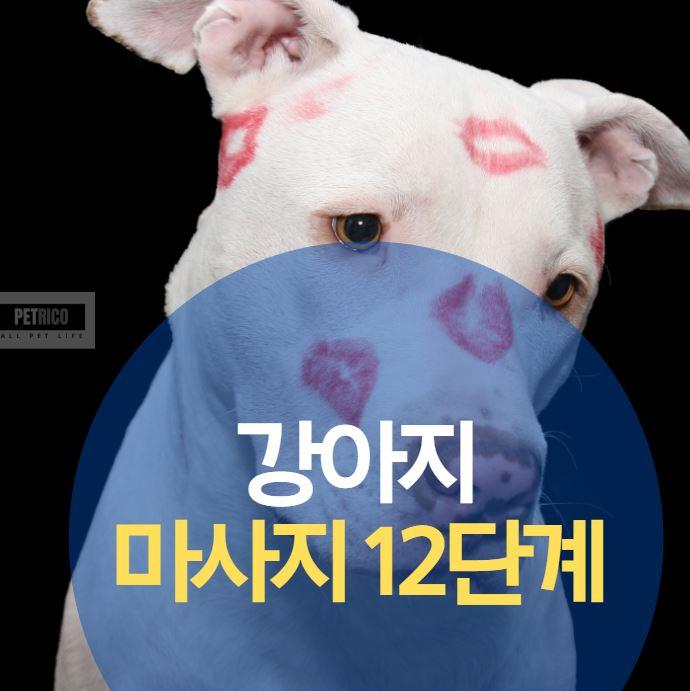 강아지 마사지 12단계
