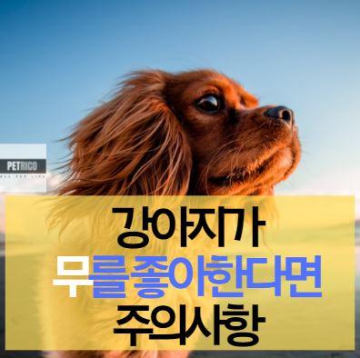 강아지 무