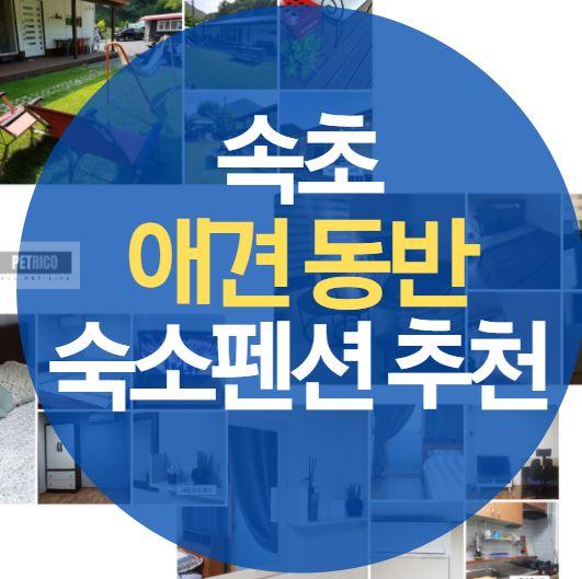 속초 애견 동반 숙소펜션 추천